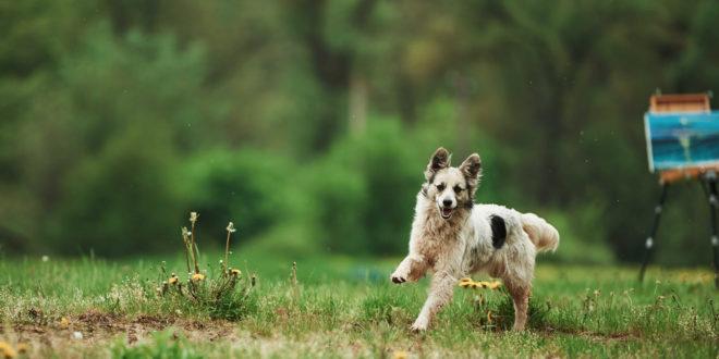 agresywny-i-bezpański-pies-zdjęcie