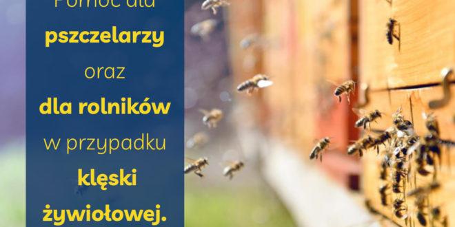 Obrazek wyróżniający - Rusza pomoc dla pszczelarzy